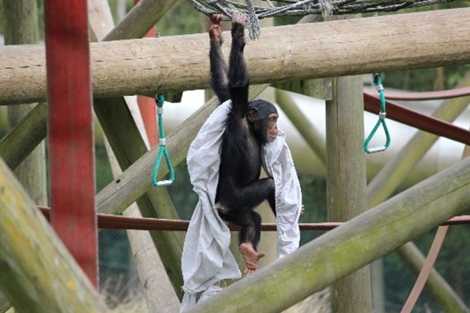 CLEAN Yeovil donates used linens to Monkey World - News - CLEAN Services